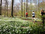 Billeder fra Rudersdal marathon 02-Maj-2010 (121/139)