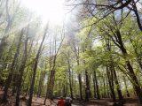 Billeder fra Rudersdal marathon 02-Maj-2010 (128/139)