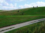Billeder fra Rudersdal Marathon 09-Aug-2008 (99/140)