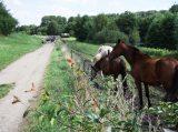 Billeder fra Rudersdal Marathon 09-Aug-2008 (112/140)