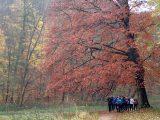 Billeder fra Rudersdal Marathon 11-Nov-2012 (5/134)