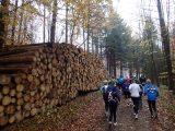 Billeder fra Rudersdal Marathon 11-Nov-2012 (21/134)