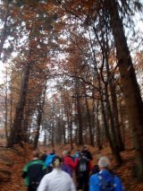 Billeder fra Rudersdal Marathon 11-Nov-2012 (24/134)