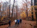 Billeder fra Rudersdal Marathon 11-Nov-2012 (27/134)