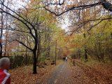Billeder fra Rudersdal Marathon 11-Nov-2012 (48/134)
