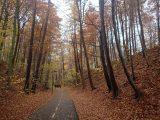 Billeder fra Rudersdal Marathon 11-Nov-2012 (50/134)