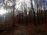Billeder fra Rudersdal Marathon 11-Nov-2012 (64/134)