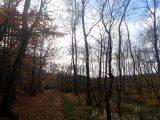 Billeder fra Rudersdal Marathon 11-Nov-2012 (66/134)