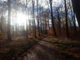 Billeder fra Rudersdal Marathon 11-Nov-2012 (71/134)