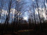Billeder fra Rudersdal Marathon 11-Nov-2012 (74/134)