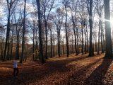 Billeder fra Rudersdal Marathon 11-Nov-2012 (75/134)