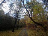 Billeder fra Rudersdal Marathon 11-Nov-2012 (77/134)