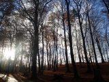 Billeder fra Rudersdal Marathon 11-Nov-2012 (81/134)