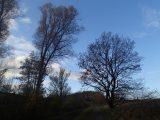 Billeder fra Rudersdal Marathon 11-Nov-2012 (83/134)