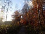Billeder fra Rudersdal Marathon 11-Nov-2012 (87/134)