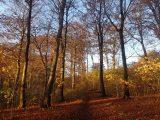 Billeder fra Rudersdal Marathon 11-Nov-2012 (98/134)