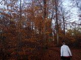 Billeder fra Rudersdal Marathon 11-Nov-2012 (107/134)