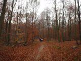 Billeder fra Rudersdal Marathon 13-Nov-2011 (63/183)