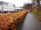 Billeder fra Rudersdal Marathon 14-Nov-2009 (146/156)