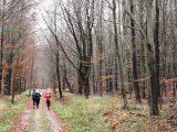 Billeder fra Rudersdal Marathon 14-Nov-2009 (149/156)