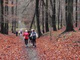 Billeder fra Rudersdal Marathon 14-Nov-2009 (150/156)