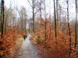 Billeder fra Rudersdal Marathon 16-Nov-2008 (13/139)