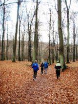 Billeder fra Rudersdal Marathon 16-Nov-2008 (18/139)