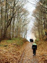 Billeder fra Rudersdal Marathon 16-Nov-2008 (27/139)