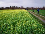 Billeder fra Rudersdal Marathon 16-Nov-2008 (28/139)