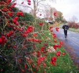 Billeder fra Rudersdal Marathon 16-Nov-2008 (48/139)