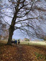 Billeder fra Rudersdal Marathon 16-Nov-2008 (91/139)