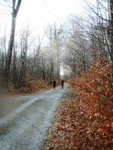 Billeder fra Rudersdal Marathon 16-Nov-2008 (139/139)