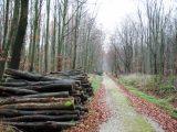 Billeder fra Rudersdal marathon 18-Nov-2007 (30/73)