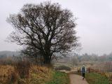 Billeder fra Rudersdal marathon 18-Nov-2007 (57/73)