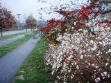 Billeder fra Rudersdal marathon 18-Nov-2007 (58/73)
