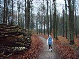 Billeder fra Rudersdal marathon 18-Nov-2007 (60/73)