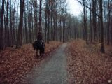 Billeder fra Rudersdal marathon 18-Nov-2007 (61/73)