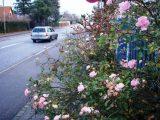 Billeder fra Rudersdal marathon 18-Nov-2007 (66/73)